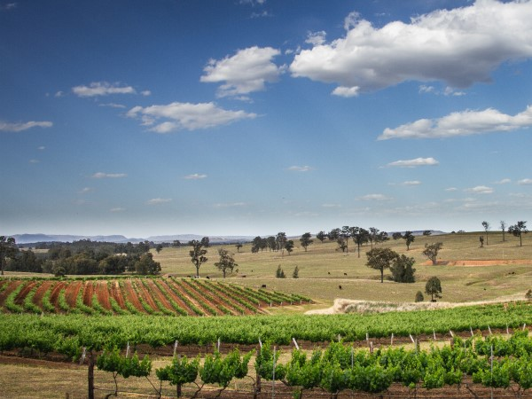 The best wineries within four hours' drive of Sydney